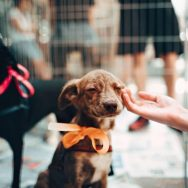 Songland Records (Weston, Canberra) are collecting recorded music and films for RSPCA ACT