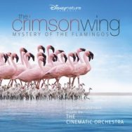 The Cinematic Orchestra:  The Crimson Wing